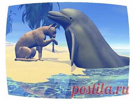 Отдохнем? Дельфин и кошка | ZooTovar.ru - Интернет-издание о животных, домашние питомцы Людям иногда бывает очень сложно понять друг друга и договориться. А вот животные, совершенно разных видов, которым не дано объясняться с помощью языка, легко устанавливают дружеский контакт и, судя по видео, хорошо понимают друг друга.