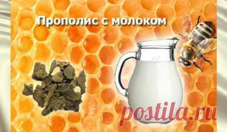 Прополис с молоком против онкозаболеваний