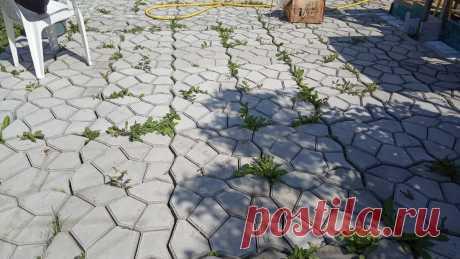 Тротуарная плитка: идея для проливки щелей от травы | Рукастый мужик | Яндекс Дзен