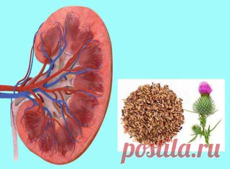 Лечение почек расторопшей / Будьте здоровы