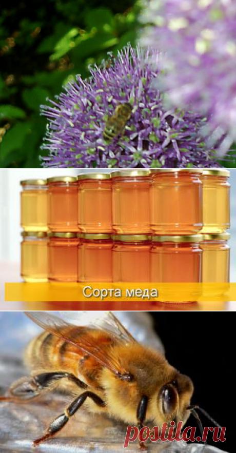 Химический состав и физические свойства цветочного меда - БиоКорова