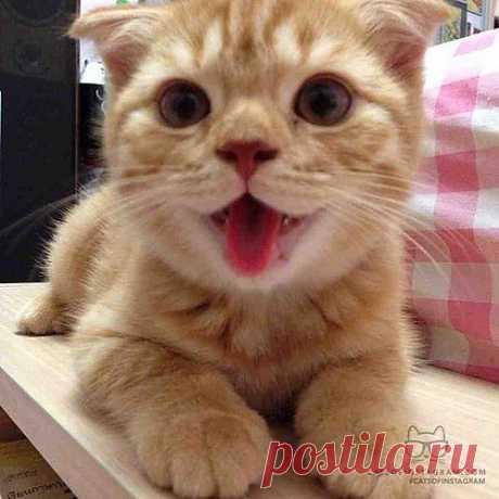 Cats of Instagram | Daily doses of original, cute, cat photos