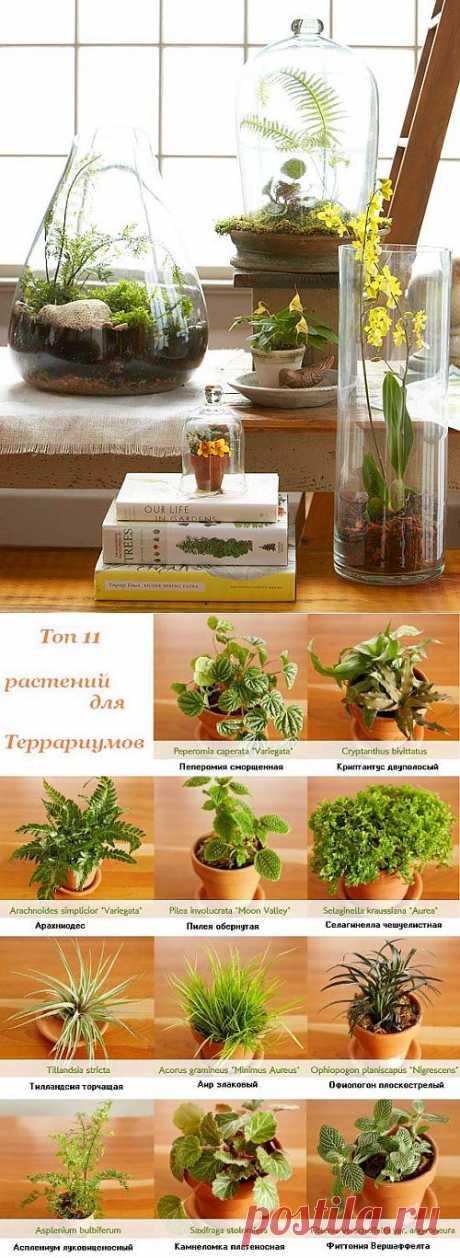 Растения для террариумов и флорариумов.