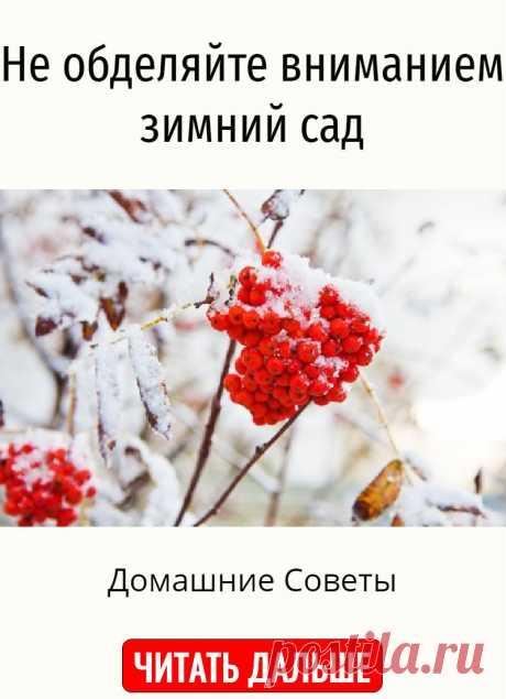 Не обделяйте вниманием зимний сад