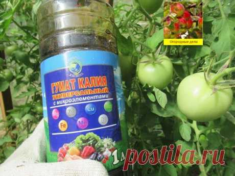 Гумат калия - проверенное средство для увеличения урожая и созревания помидоров   Огородные дела   Яндекс Дзен