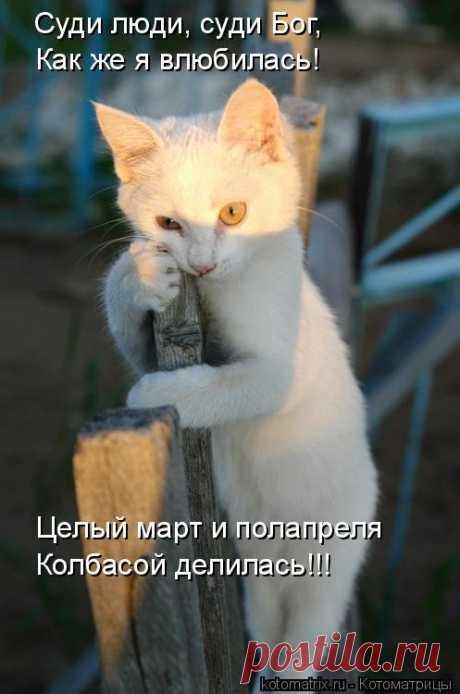 Отличная котоматрица для поднятия настроения