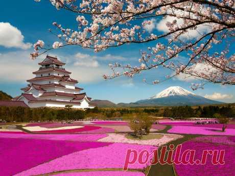 12магических фотографий цветения сакуры