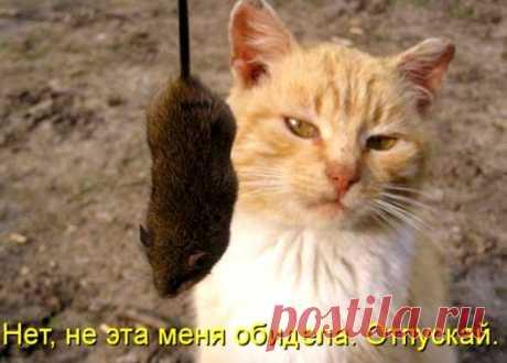 Коты и кошки шутить изволят...                                                                     link