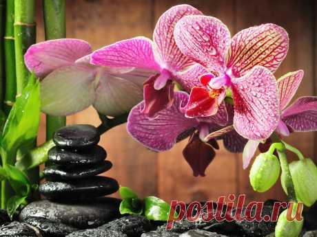 Как правильно поливать орхидеи для длительного цветения Три способа полива орхидей, обеспечивающие им длительное и обильное цветение.