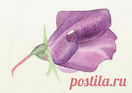 8 способов нарисовать цветы: акварелью и карандашами