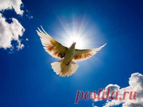 МОЛИТВА-ЗАГОВОР К АНГЕЛУ-ХРАНИТЕЛЮ ОТ СГЛАЗА И КОЛДОВСТВА  Молитву надо читать сразу, как почуете неладное, будто вы не в своей тарелке, или резко заболеете без причины.   Ангел мой, утешитель и хранитель мой, сохрани мою душу, сокрепи мое сердце на всяк день, на всяк час, на всякую минуту. Я, раб Божий (имя), по утру встаю, росой умываюсь, зеленым платком утираюсь от Спасова пречистого запрета, враг сутона, отшатися от меня на сто верст и беги еще на тысячу. На мне есть к...