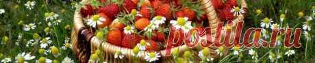 Блюда из дикорастущих трав и плодов | Путешествие по Карелии