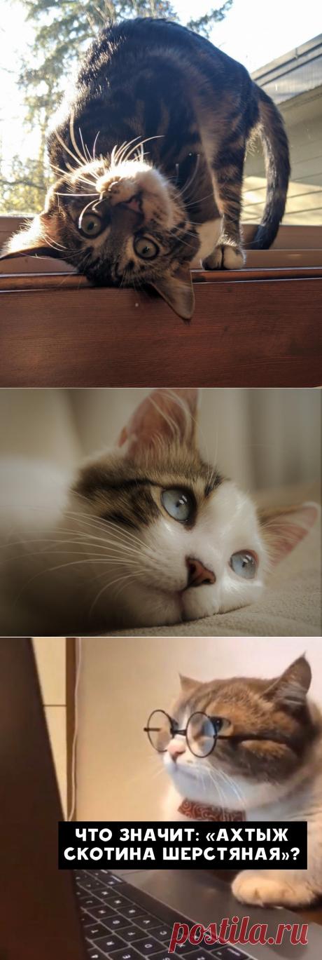 Кошачий пост: фото-фото-фото