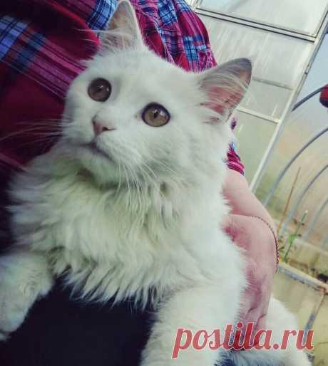 Кот Гавр приводит домой своих бездомных подружек рожать котят | О кошках и не только | Яндекс Дзен