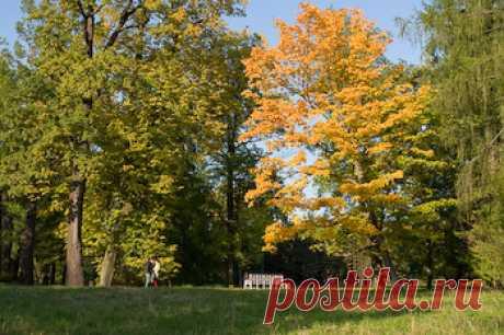 Золотая осень в Царском Селе // Статьи и фотоотчеты // Клуб фотопутешественников FOTOTRAVELLER