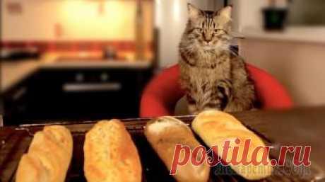 Хлеб на допек или багет за 10 минут Вашему вниманию - три варианта приготовления багета - за 15 часов, за 3 часа или за 10 минут. Результат подтвержден высшим гарантом качества - Мистером Котом. Ингредиенты и видео-рецептниже. ↴ВИДЕО-Р...