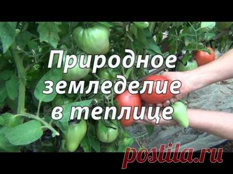 Природное земледелие в теплице - YouTube