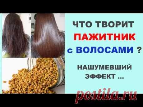 Что творит пажитник с волосами ?