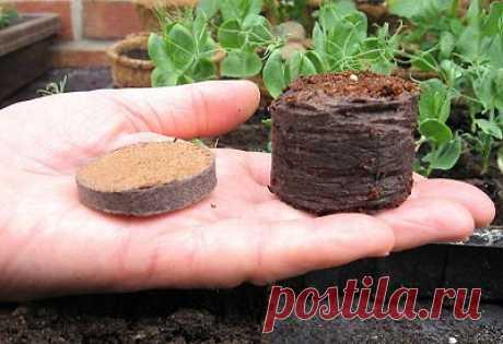 Выращивание рассады без земли — 6 соток