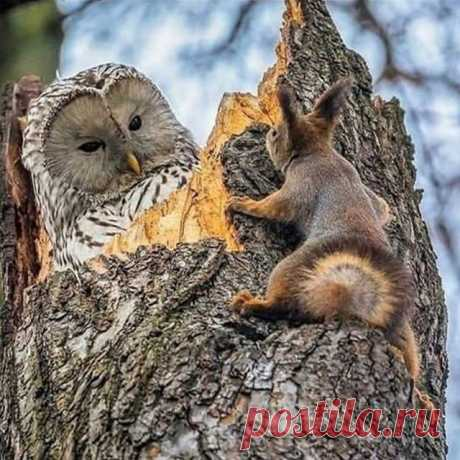Photo shared by Carole Tanenbaum on September 25, 2020 tagging @owl_lovers801.
