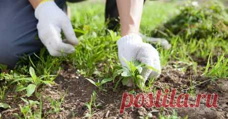 """Как избавиться от сорняков – секреты """"чистых"""" грядок Борьба с сорняками – главная головная боль всех дачников. Как подавить рост сорных трав эффективно и легко, разбираемся вместе."""