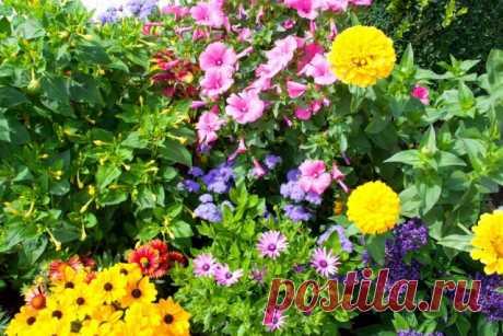 Как заставить цветы цвести обильнее