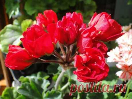 (112) МОЯ ДАЧА дизайн, огород, сад, цветы, идеи, советы, дачники и дачная жизнь