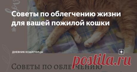 Советы по облегчению жизни для вашей пожилой кошки Все кошки переживают процесс старения по-разному. Некоторые из них остаются активными до конца жизни, а некоторые явно сдают. Многие хозяева начинают замечать, что приближаясь к пожилому возрасту кот становится не таким энергичным и веселым, как он когда-то был. Вот 10 советов, которые помогут вам ухаживать за пожилыми кошками.