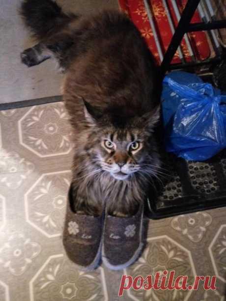 Не кот в сапогах, а кошка в тапочках