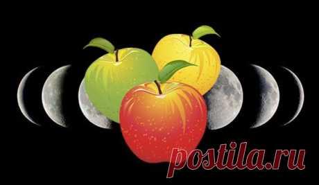 Посадка яблони осенью – как правильно посадить: сроки и рекомендации