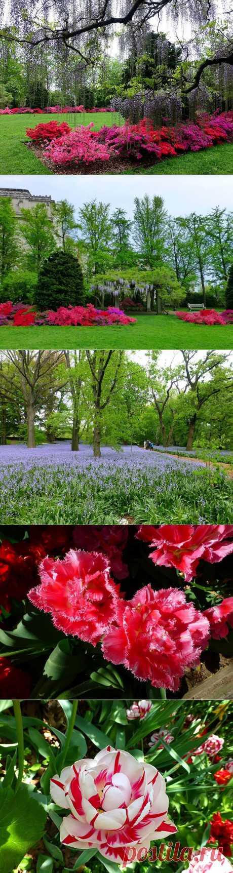 Бруклинский ботанический сад.Нью-Йорк.