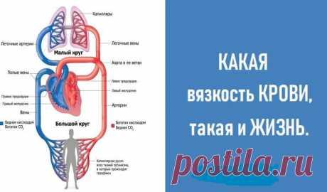 КАКАЯ вязкость КРОВИ, такая и ЖИЗНЬ.  Если недостаток магния — сосуды становятся дырявыми как решето.  Если недостаток калия в организме — сердечная мышца начинает сбоить. Сердечно — сосудистая система человека – изначально это очень над…