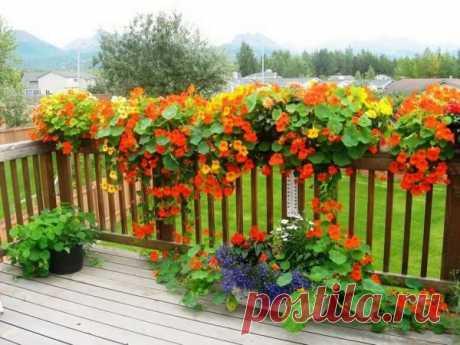 Растения, которые могут украсить вход в участок