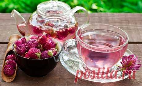 Бабушка посоветовала пить три раза в день по 150 мл такого чая. Результат поразил меня!