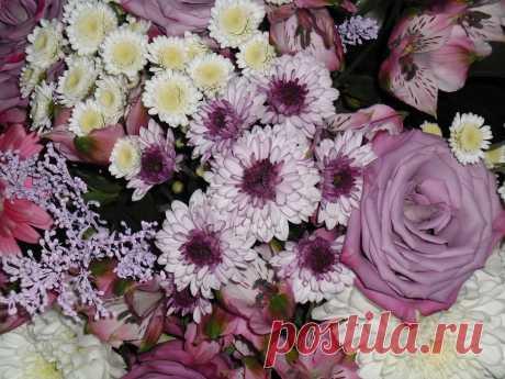 Фото 659, альбом природа - 139 фото   Фотографии Галины Алиевой.