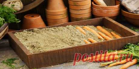 8 ways of storage of carrots which will not bring you!