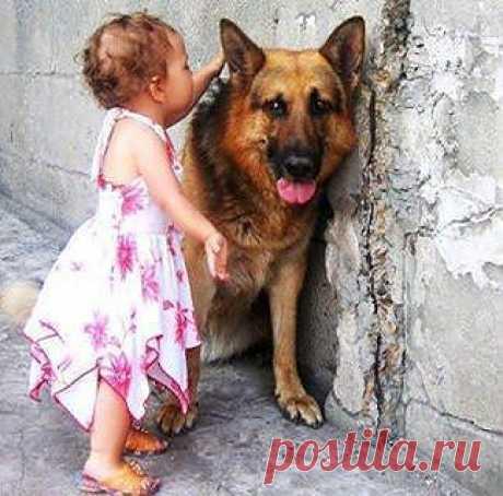Ребёнок с овчаркой   ----    Ирина Печкарева | Facebook