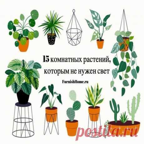 Комнатные цветы для темной комнаты: неприхотливые растения в вашем доме Если вы любите домашние растения, но окна вашей квартиры выходят на ту сторону. Сегодня мы расскажем нашим читателям о том, какие существуют комнатные растения для темных помещений.