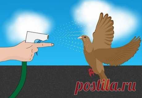 Как избавиться от голубей на балконе — Полезные советы
