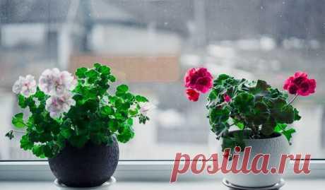 Перекись водорода для комнатных цветов-бальзам в зимнее время! — Мир интересного