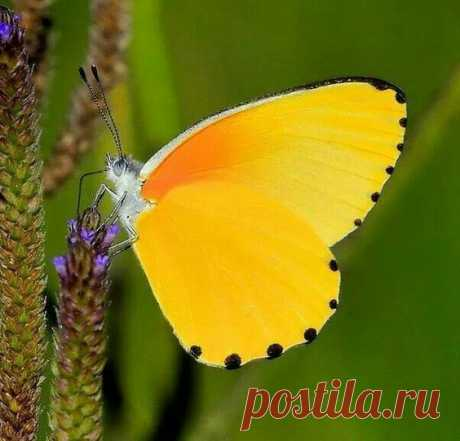 (523) Pinterest