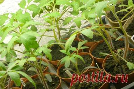 Когда и чем первый раз удобрять рассаду томатов, перцев и баклажанов