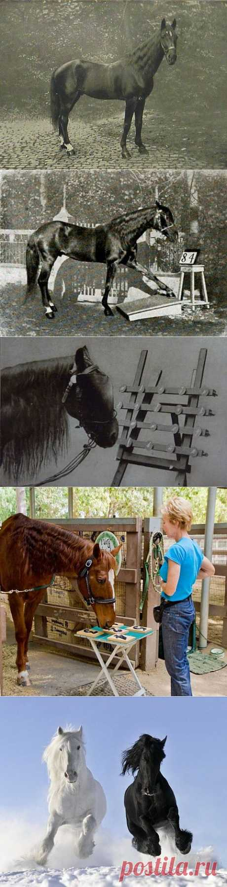 Самые умные лошади | Уши, лапы, хвост