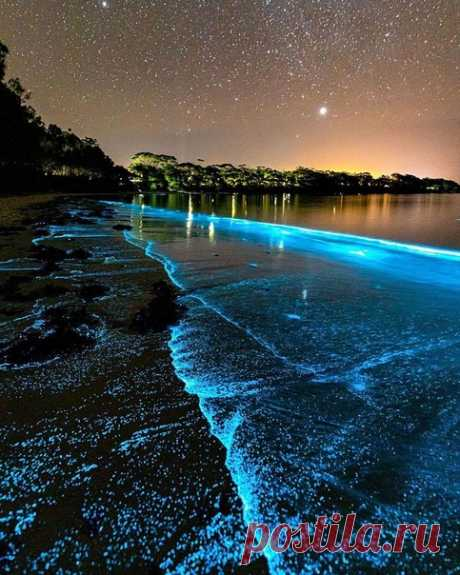 Удивительная планета Австралийский светящийся пляж