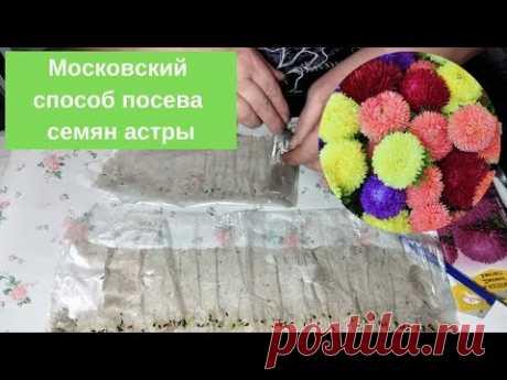 С цветами по жизни!: Московский способ посева семян астры