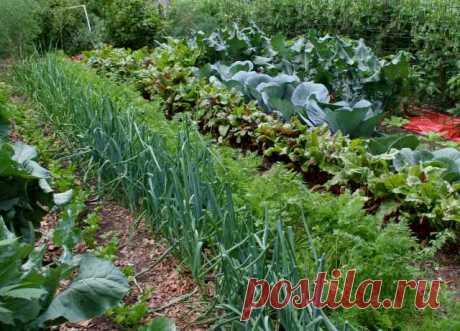El hidrato de amonio: la aplicación sobre la huerta y en el jardín. La fertilización de las plantas, la defensa de los saboteadores y las enfermedades