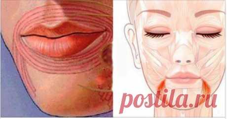 Поднимаем уголки губ. Все возможно с нашим видео! – Счастливая женщина Молодость лица продлится намного дольше! На нашем лице есть мышцыкоторые тянут уголки рта вверх, а есть те, которые опускают его вниз. Каждый раз, когда мы улыбаемся, мы задействуем мышцы, которые как раз приподнимают уголочки рта. Если мышцы вокруг рта не работают, очень быстро начинают формироваться маленькие вертикальные складочки, а по сути — морщины, уголки постепенно …