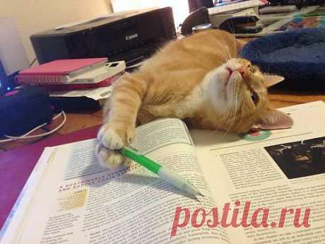 Очаровательные братья наши меньшие   Приколы про котов :)