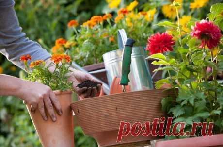 """Привлекательные многолетние растения, способные украсить любой садовый участок   Журнал """"JK"""" Джей Кей Для создания эффектного цветника мало засадить клумбу яркими однолетними цветами. Хорошо выглядит лишь тот цветник, который на протяжение всего сезона"""
