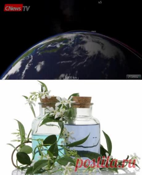 Как наполнить дом приятными ароматами с помощью эфирных масел